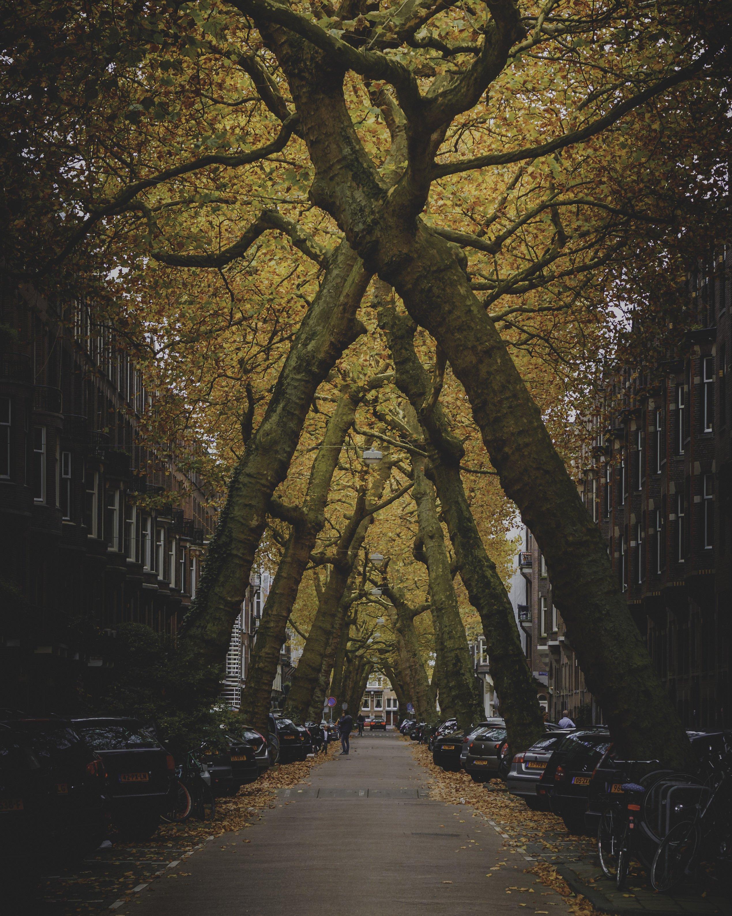 AMSTERDAM-JAN-2018-057
